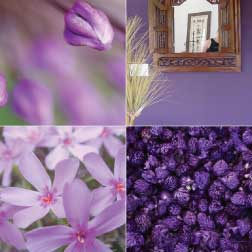 The Purple Color In Home Decorating